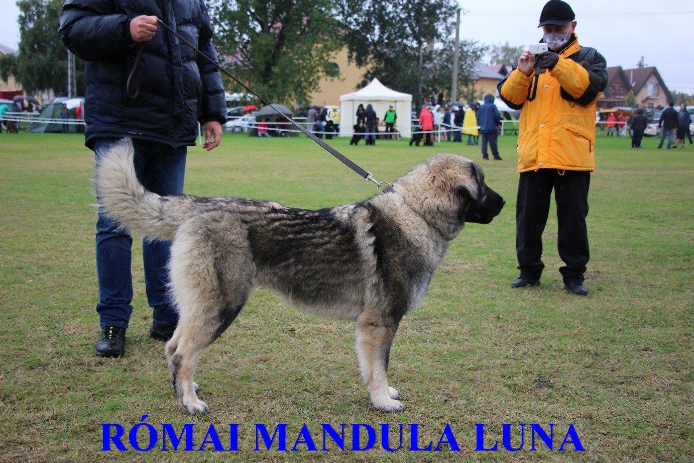 RÓMAI MANDULA LUNA (3)