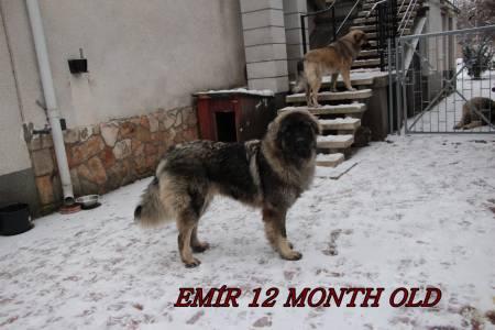 12 Hónapos